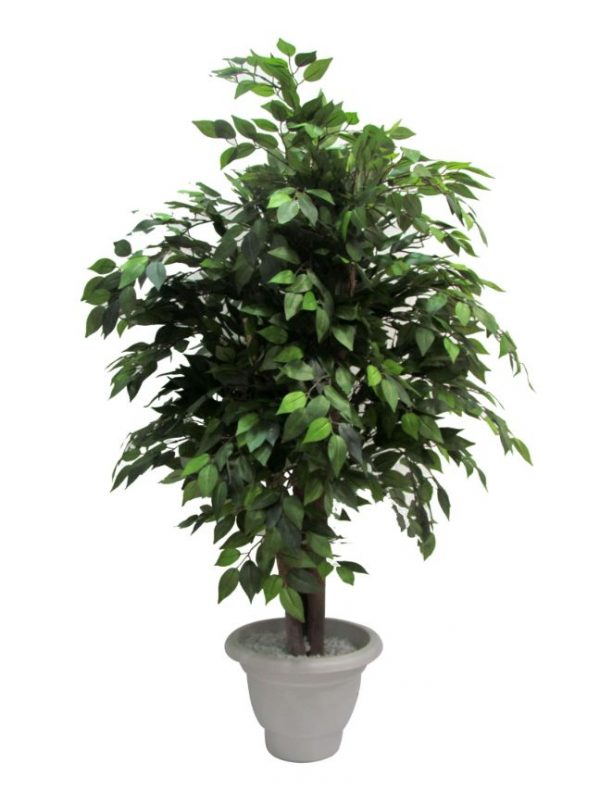AG - Artificial Plants Ficus